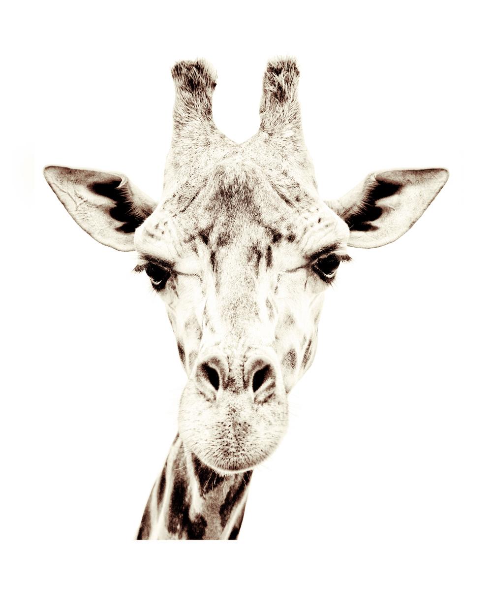 magnetische tapete giraffe petite catrin. Black Bedroom Furniture Sets. Home Design Ideas